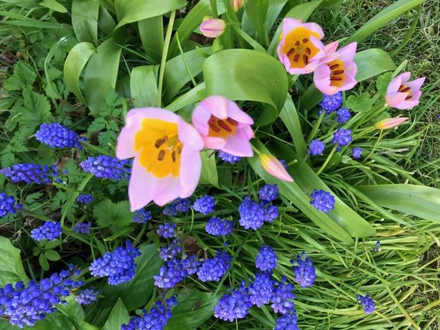 Primrose's Spring Tips
